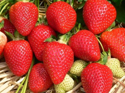 Asia Erdbeere