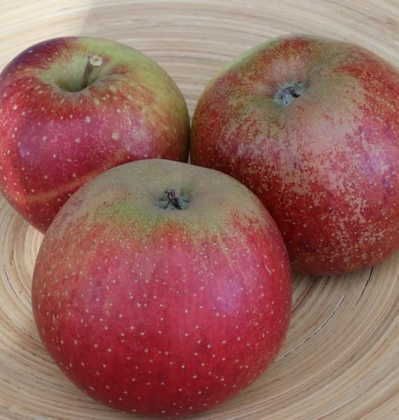 Wellant Apfel