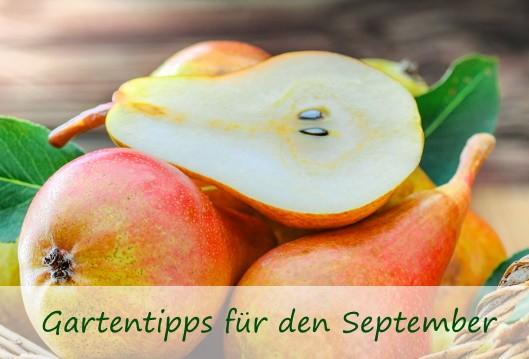 Desktop-Titelbild-Gasrtentipps-September