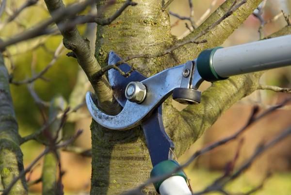 Februar-Bild-Baumschnitt