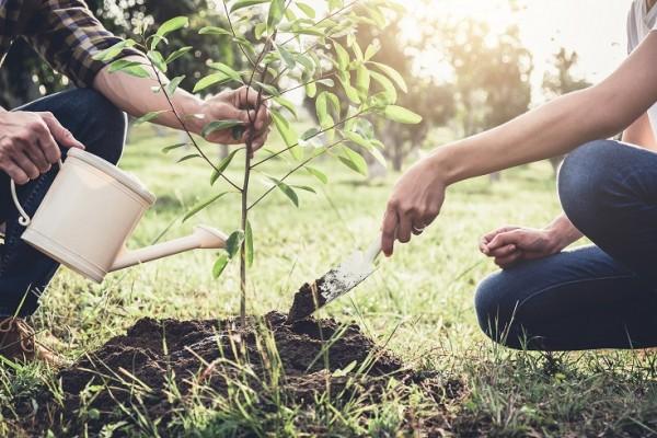 M-rz-Bild-Baumpflanzung