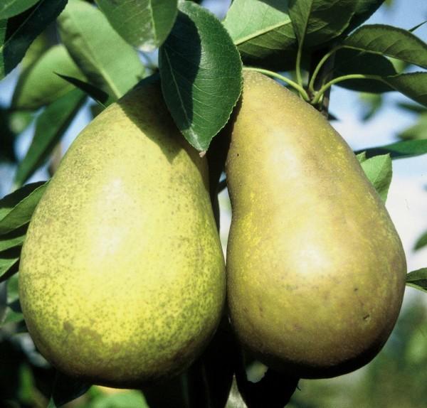Frühe aus Trevoux