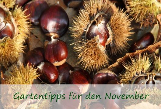 Desktop-Titelbild-Gasrtentipps-November2