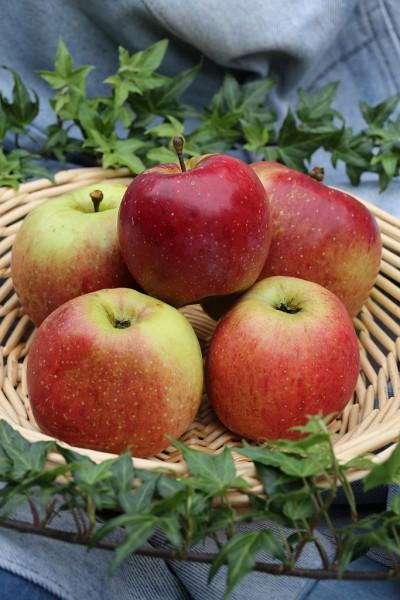 Apfel - Florina ®