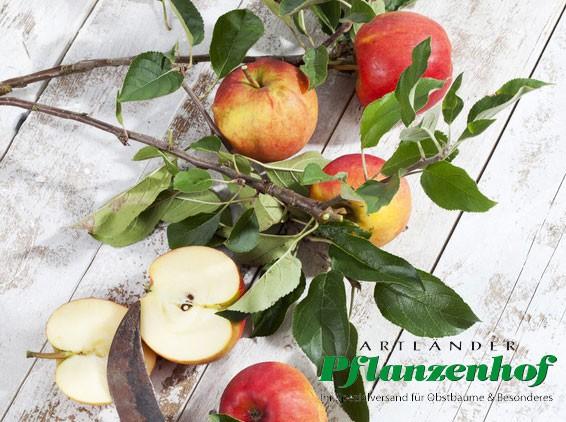 Apfel - Ecolette (S)
