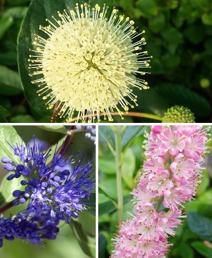Bienenpflanzen-Set